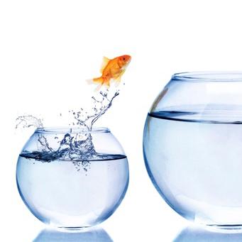 the big leap, der große Sprung, Veränderung, Coaching, Kreativität, Liebe, Reichtum, Geld, Fülle, Berufung