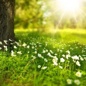 Frühling, Erwachen, Baum, Licht, Blumen