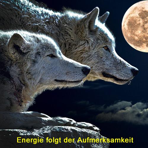 Wolf, Wölfe, Energie, Aufmerksamkeit, Indianer