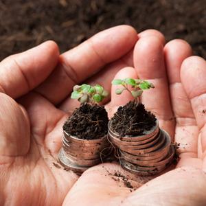 Geld, annehmen, empfangen, Baum, Pflanze, Liebe