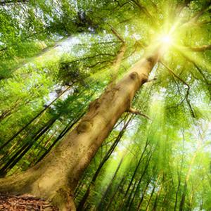 Open-Space, Baum, Himmel, Erde, Balance_qu Kopie