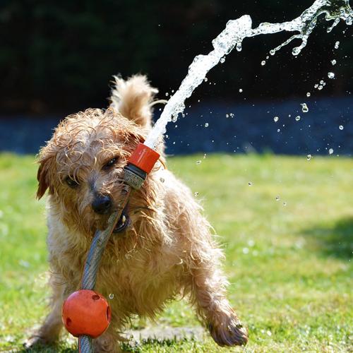 Wasserschlauch, Hund, Lebensfreude, Blockaden lösen