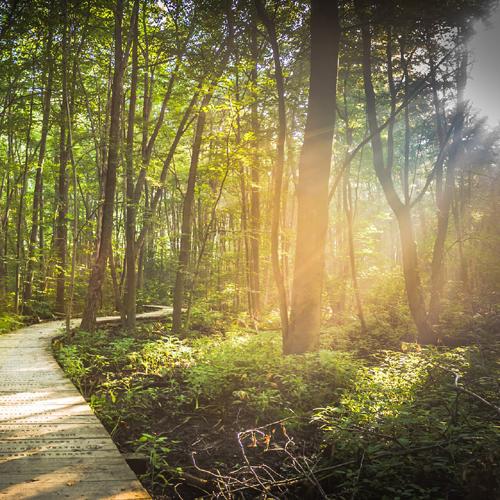 Weg, Pfad, Licht, Wald, Stille, Natur, Erholung, Entspannung