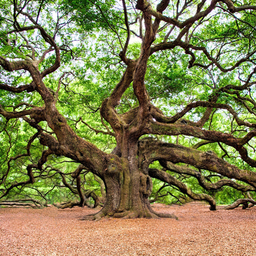 Baum, Größe, Erwachen, Selbstbewusst, Himmel, Erde, Wurzel, Potenzial, Potential